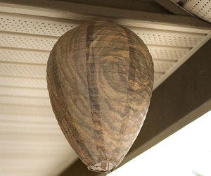 Faux Wasp Nest - All-Natural Wasp Deterrent