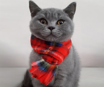 Fleece Cat Scarves