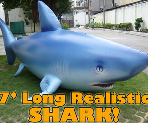 Giant 7' Inflatable Shark