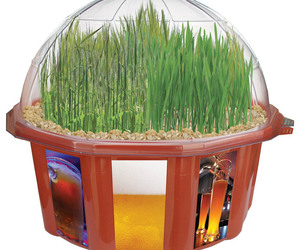 Grow Your Own Beer Garden