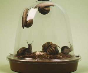 Grow Your Own Escargot (Snails)