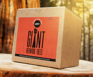 Grow Your Own Giant Redwood Tree Kit