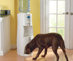 HduO - Water Dispenser for People and Pets