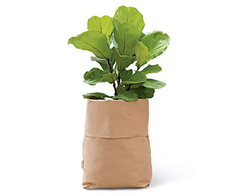 Italian Leather Planter Sacks for Potted Plants