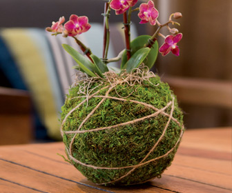 Japanese Kokedama Gardening Kit - Create Unique Living Art