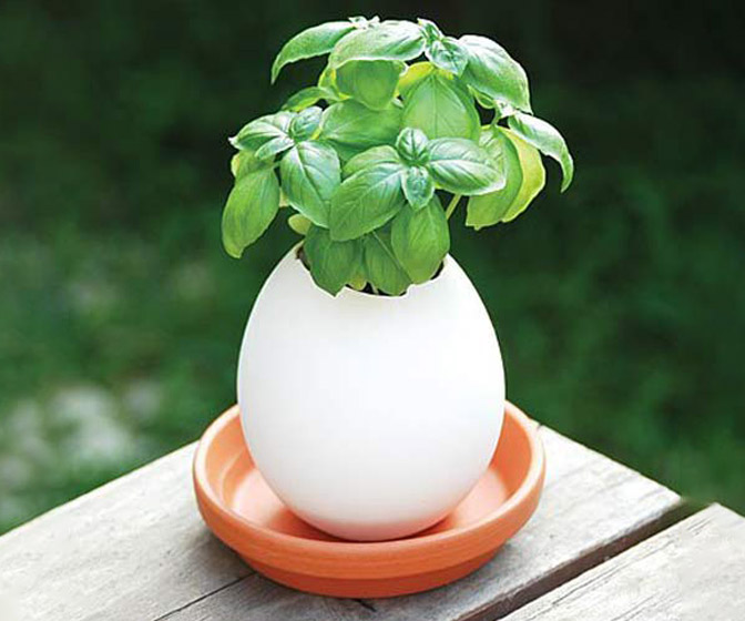 Jumbo Egglings - Plants You Hatch and Grow - Now Twice As Big!