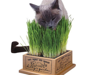 Kitty's Garden - Organic Cat Grass Kit