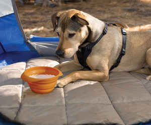 Kurgo Collaps-a-Bowl - Portable Pet Travel Bowl