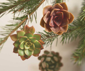 Living Succulent Ornaments