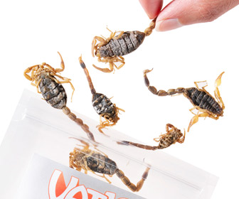 Manchurian Scorpions - Tasty Pack of Edible Scorpions... Stinger and All!
