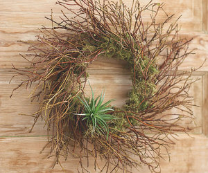 Manzanita Air Plant Wreath