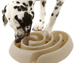 Maze Dog Food Bowl - Slows Rapid Eating