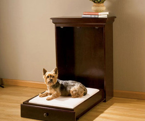 Murphy Bed Just for Pets