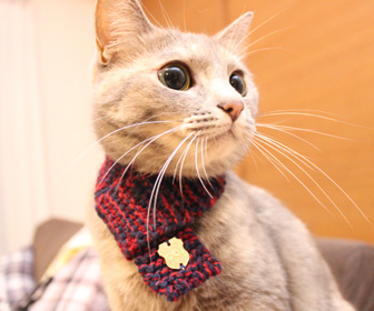 Neko Muffler - Knitted Cat Scarf
