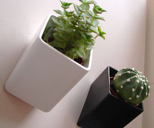 Off The Wall Mini Flower Pots