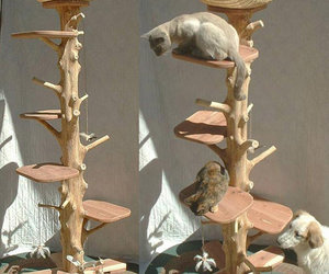 One Of A Kind Natural Cedar Cat Climbing Tree