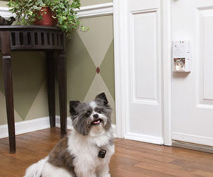 PetSafe - Smart Pet Sensing Doorbell