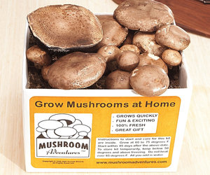 Portobello Mushroom Growing Kit