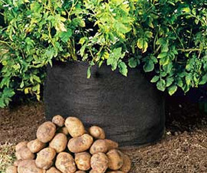 Potato Bin - Grow Your Own Potatoes - No Garden Required!