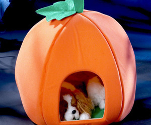 Pumpkin Pet House