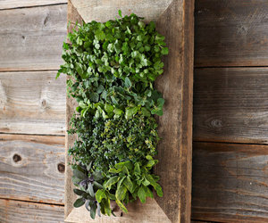 Reclaimed Barn Door Vertical Wall Planter