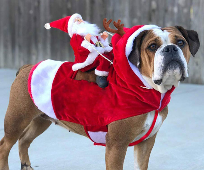Santa Claus Dog Rider Costume