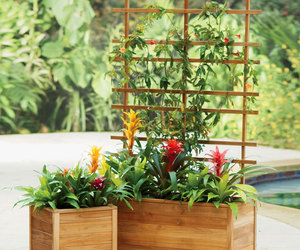 Self-Watering Teak Planters - Built to Last a Lifetime