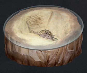 Star Wars Return of the Jedi Sarlacc Pit Coffee Table Concept