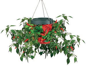 Topsy Turvy Upside-Down Hot Pepper Planter