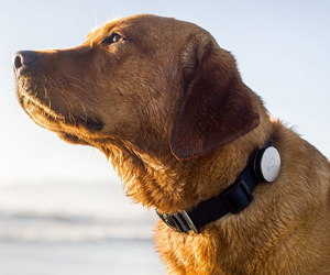 Whistle - Activity Monitor For Dogs