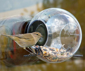 Window-Mounted Birdfeeder