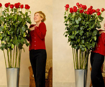World's Tallest Red Roses