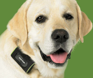 Zoombak - GPS Dog Tracking System