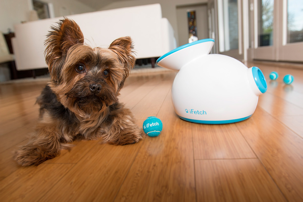 automatic fetch machine for dogs