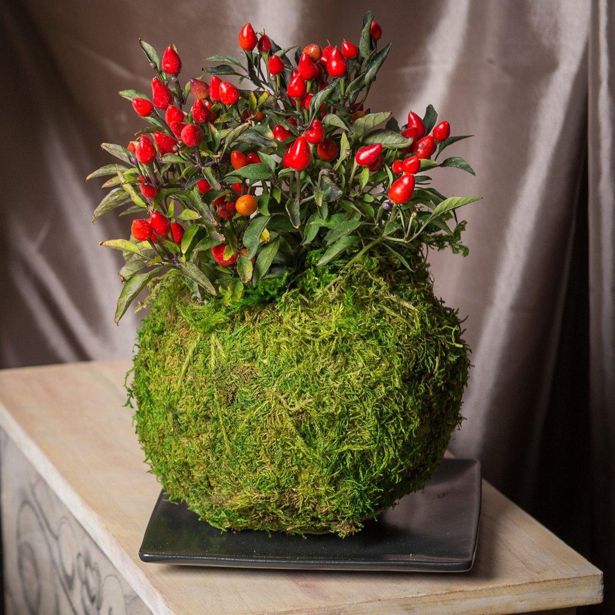 Japanese Kokedama Gardening Kit Create Unique Living Art