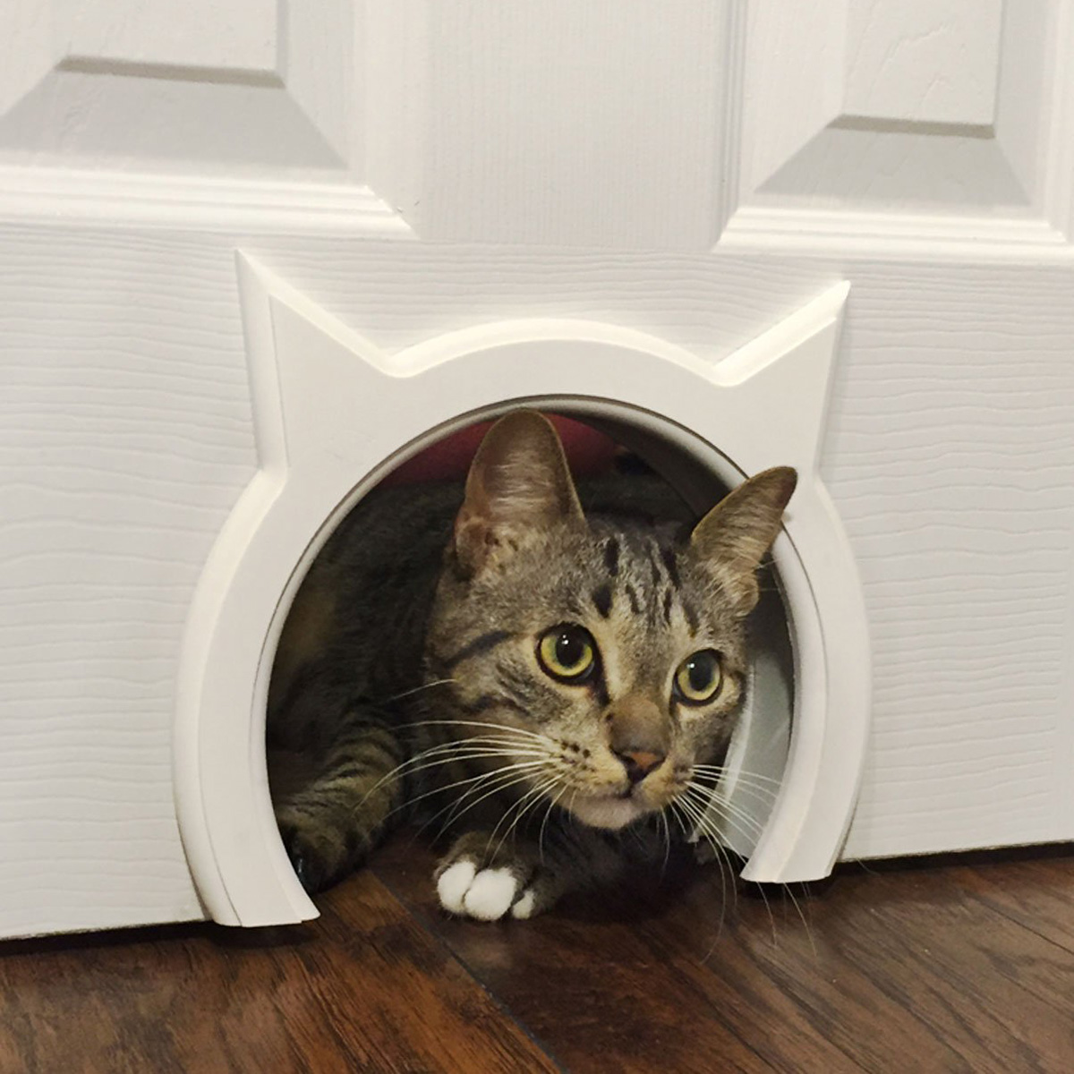 Kitty pass interior cat door the green head - The kitty pass interior cat door ...