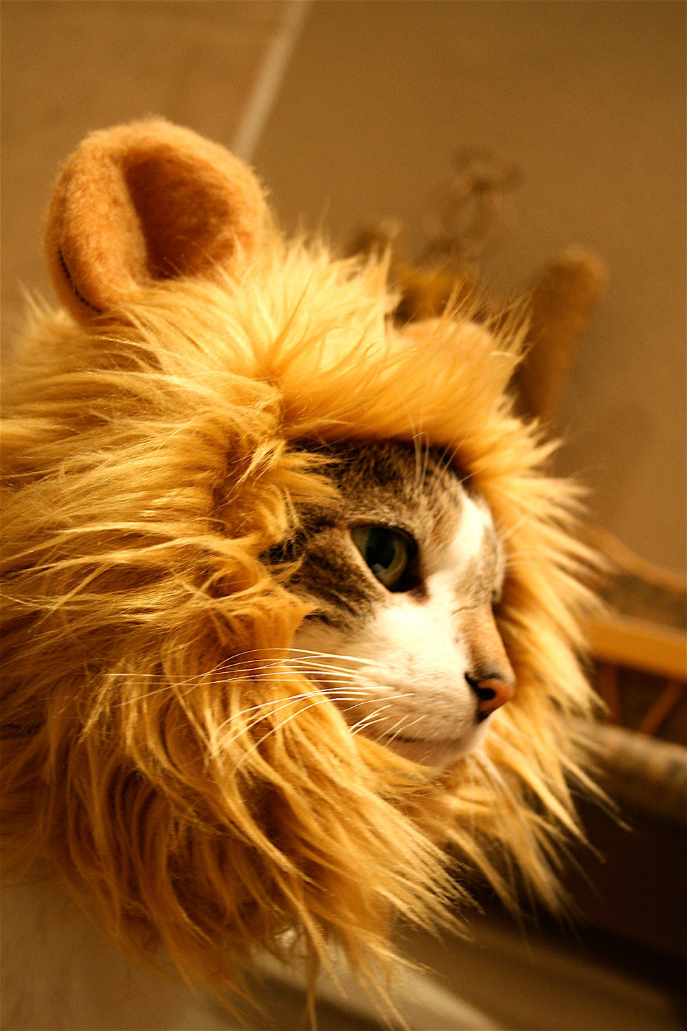 Lion S Mane Cat Hat The Green Head