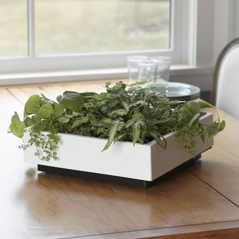 Exceptional Living Art Green Wall / Tabletop Planter