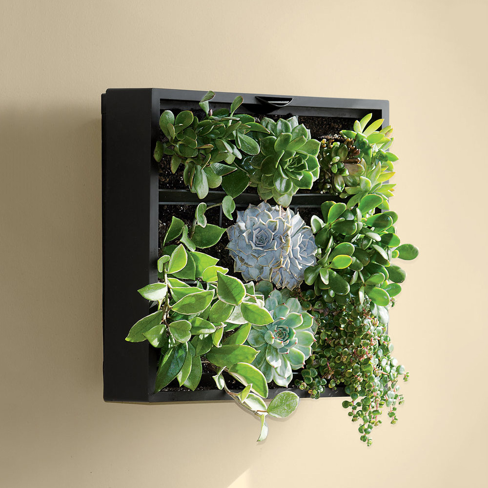 Living art green wall tabletop planter the green head for Indoor decorative live plants