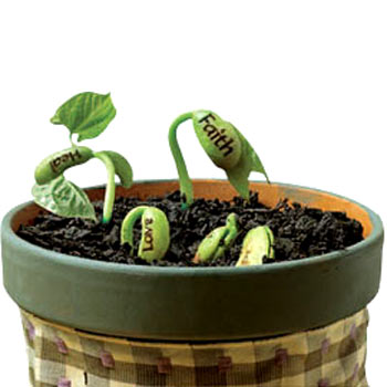 Magic Wish Beans Sprouts Reveal Secret Messages The