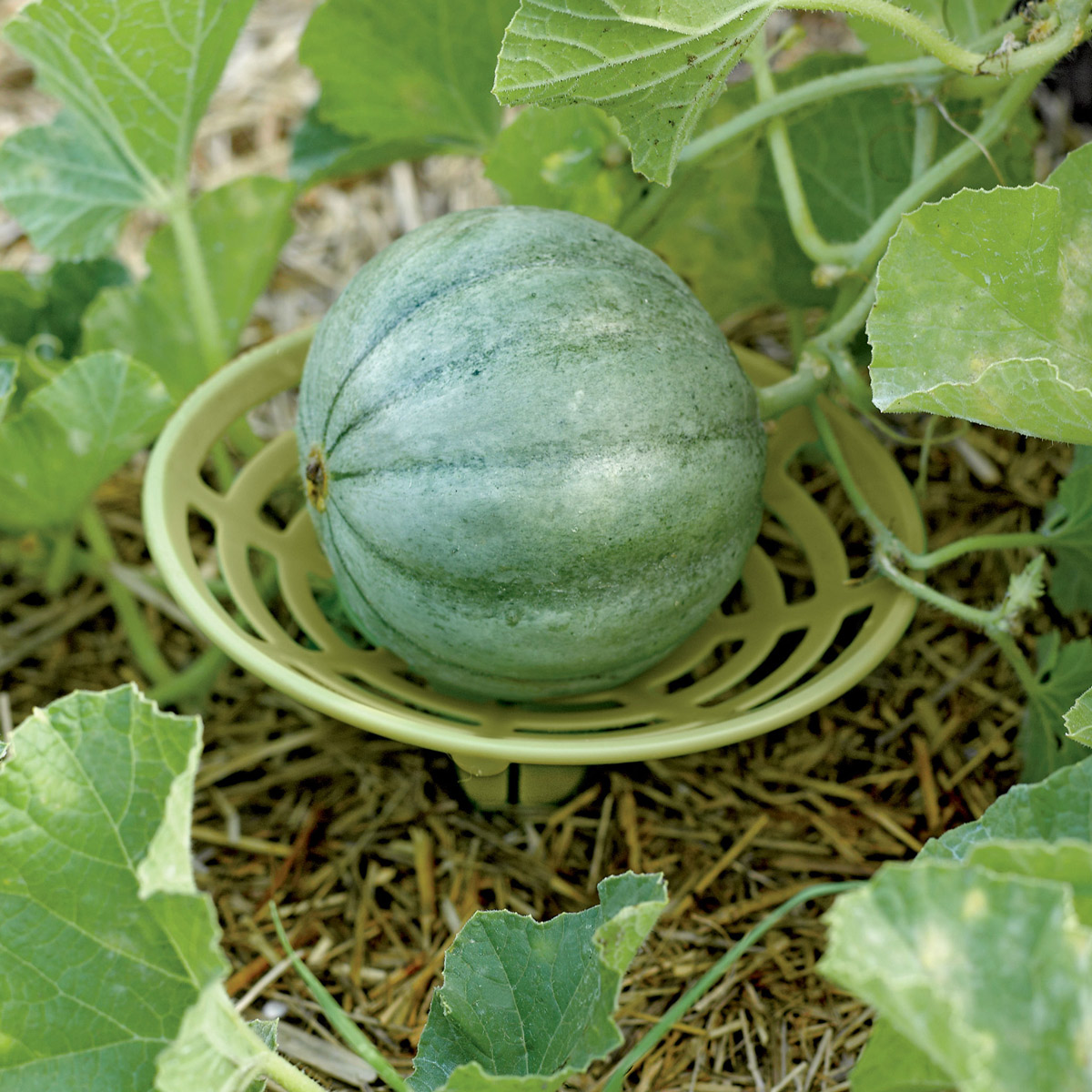 Melon And Squash Garden Cradles The Green Head