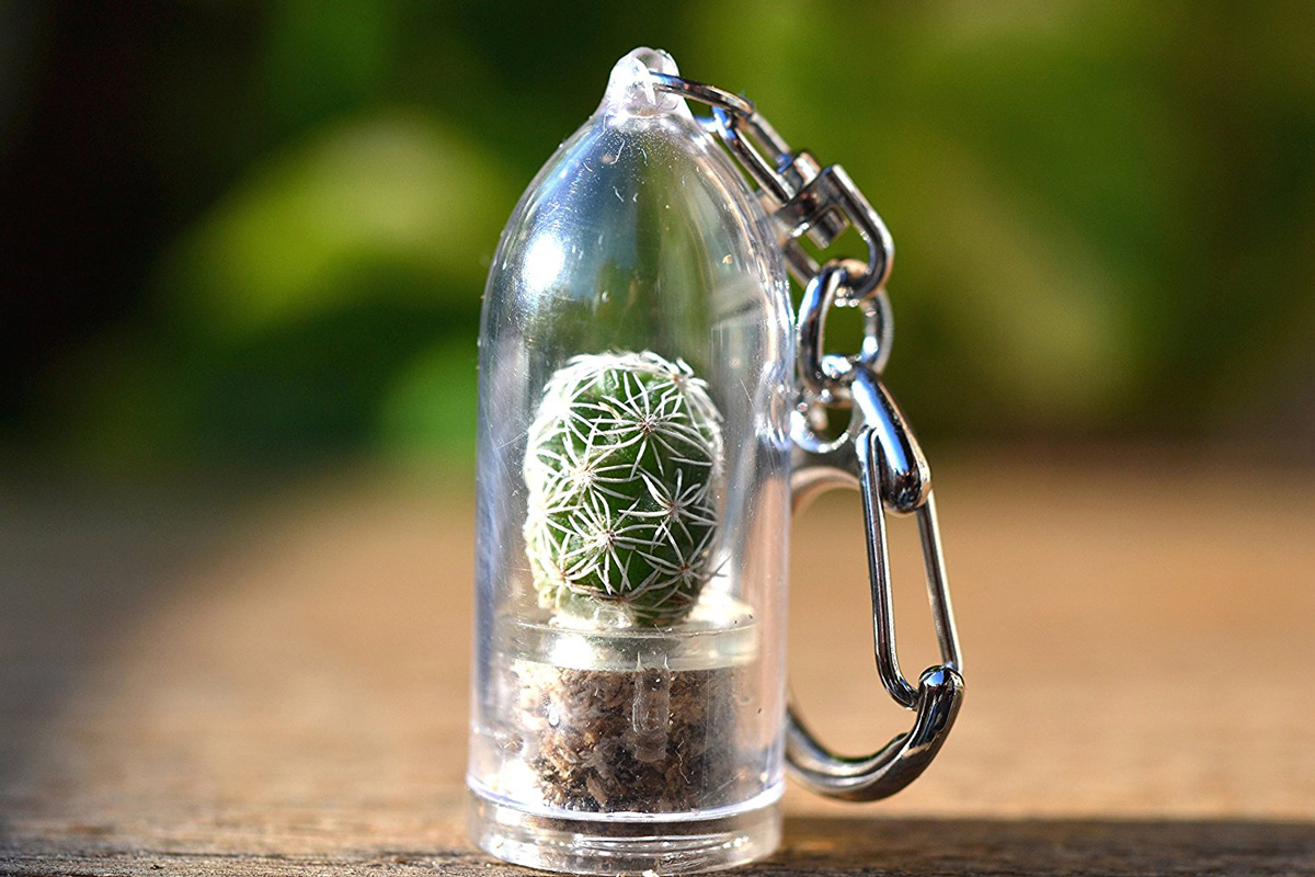 Mini Cactus Terrarium Keychains The Green Head