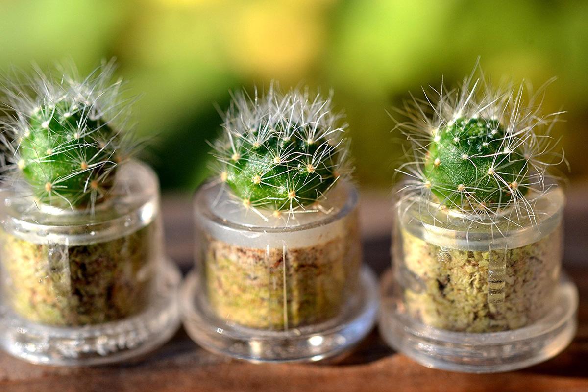 mini cactus terrarium keychains the green head. Black Bedroom Furniture Sets. Home Design Ideas
