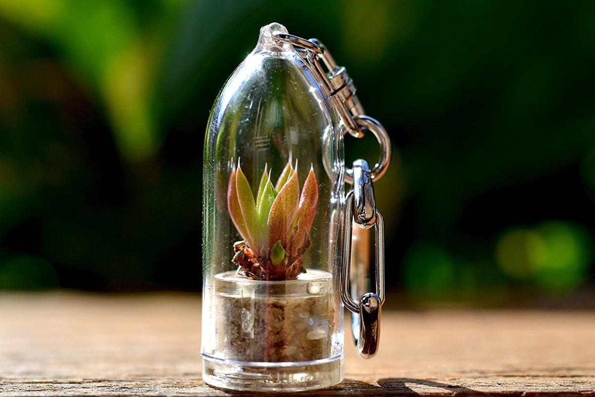 Mini Cactus Terrarium Keychains The Green Head