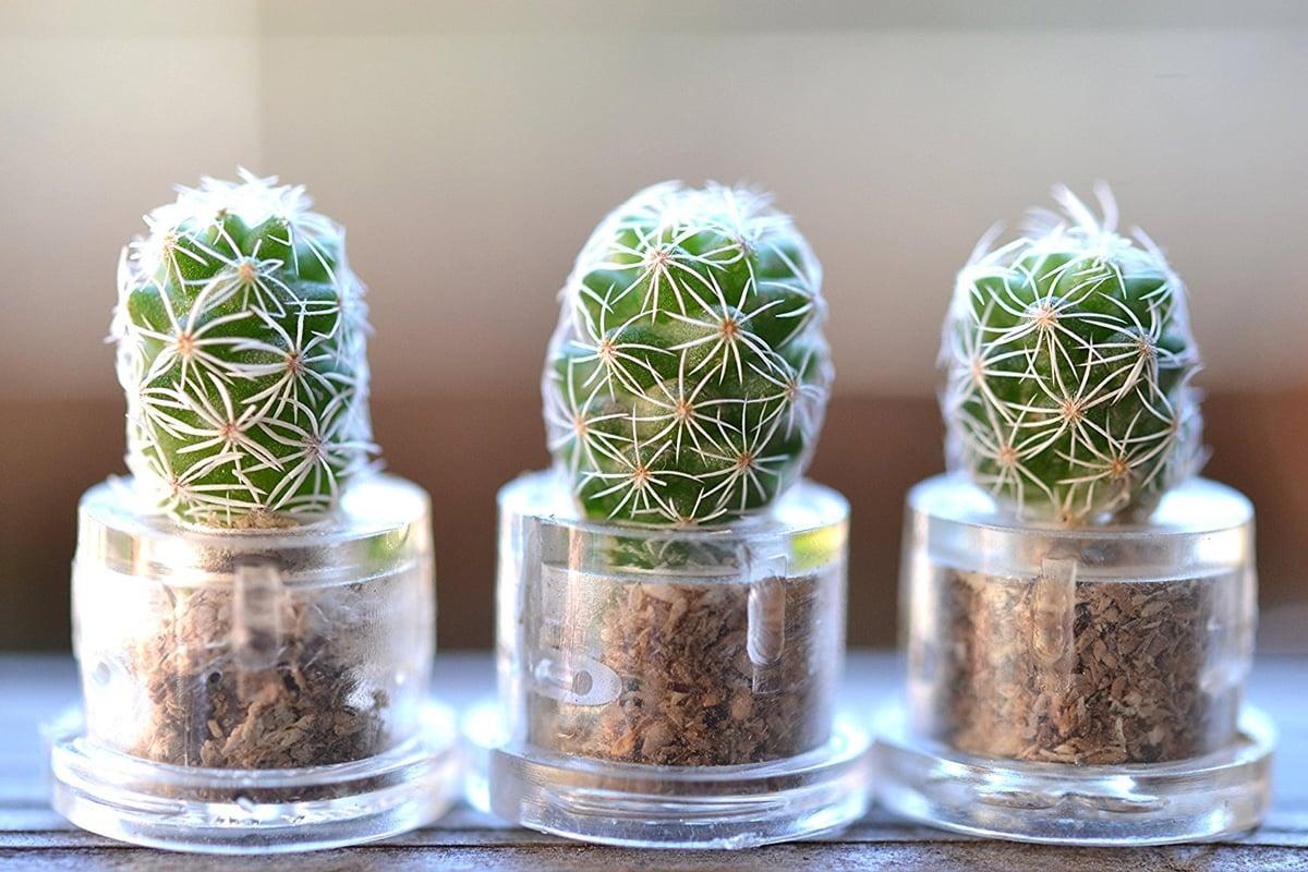 Mini Cactus Terrarium Keychains