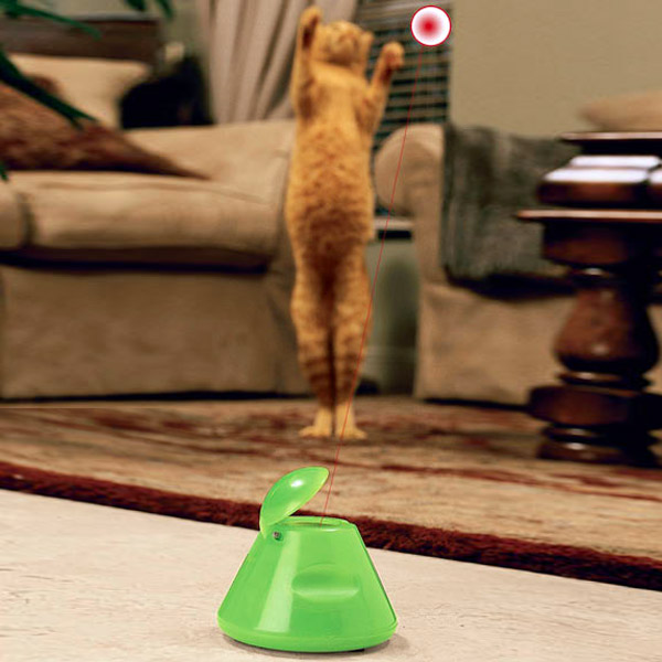 cool things to get for your cat