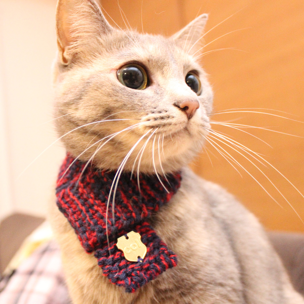 Cat: Knitted Cat Scarf