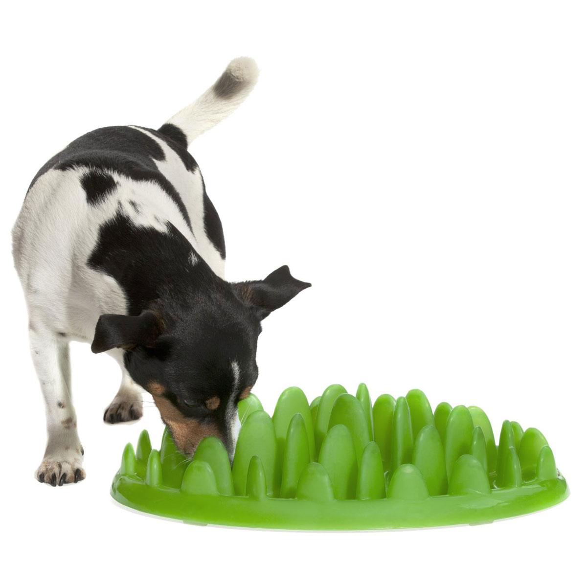 Dog Choking Eating Grass