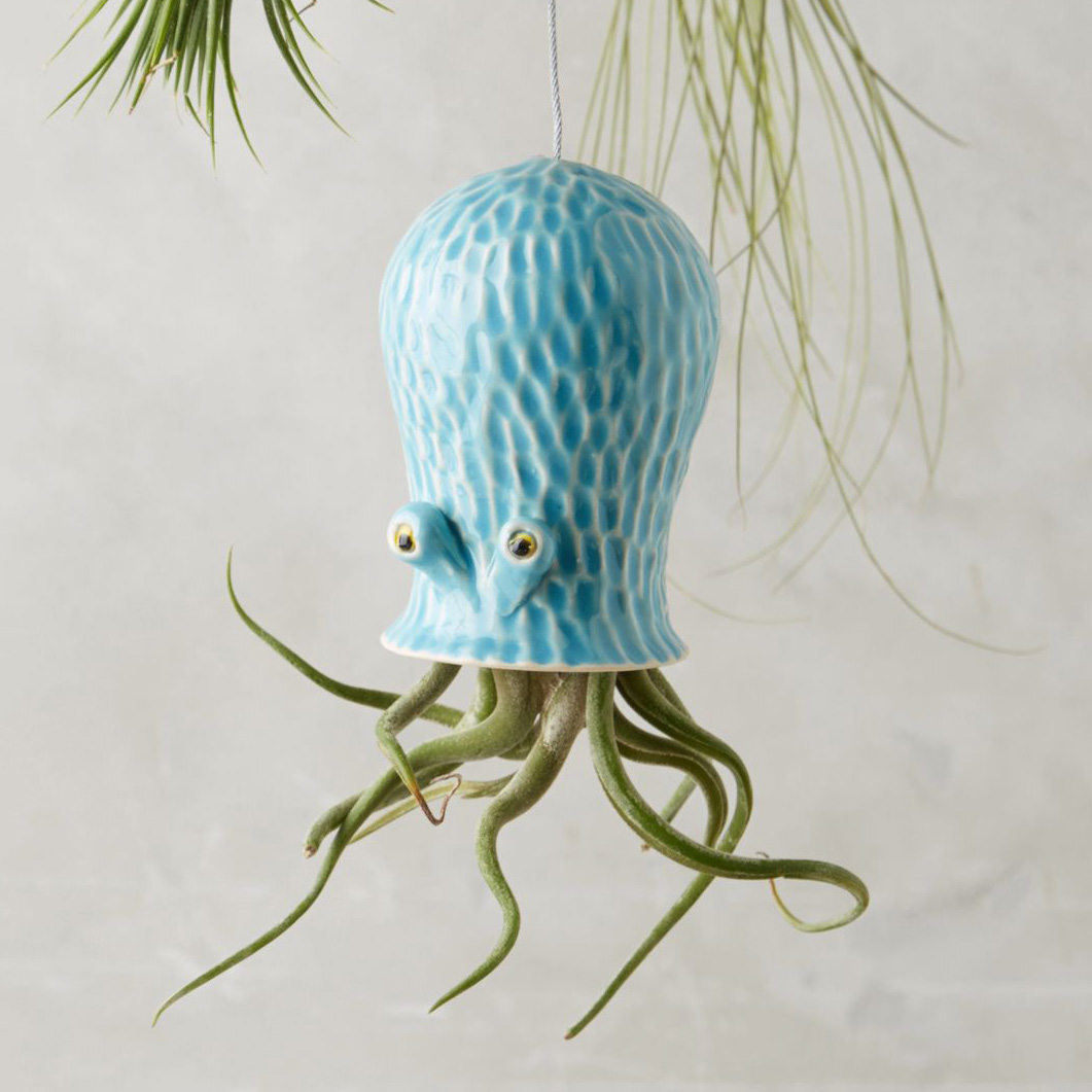 Octopus air plant hanging planter the green head for Plante a planter