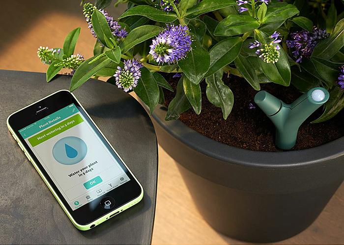 parrot flower power app controlled smart plant monitor the green head. Black Bedroom Furniture Sets. Home Design Ideas